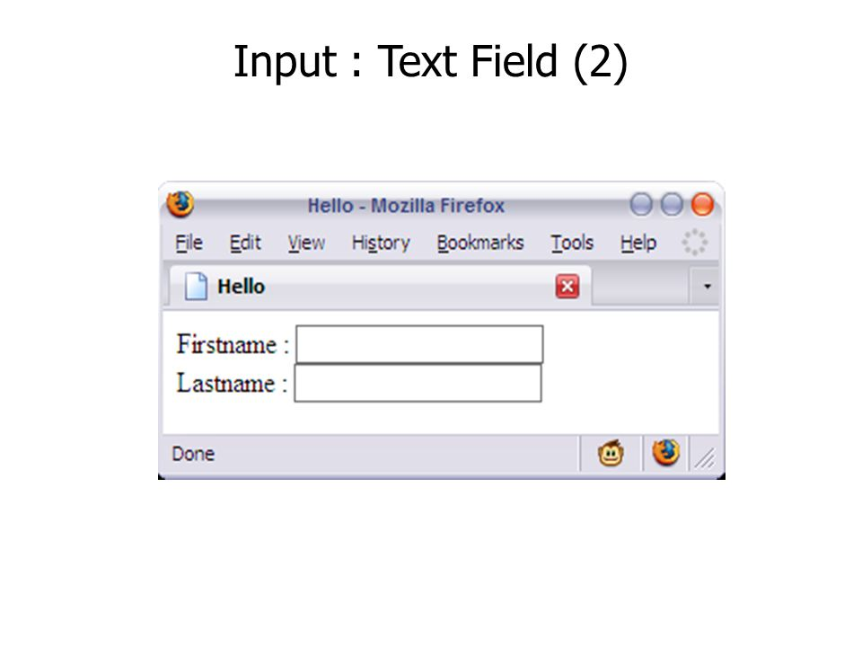 Input : Text Field (2)