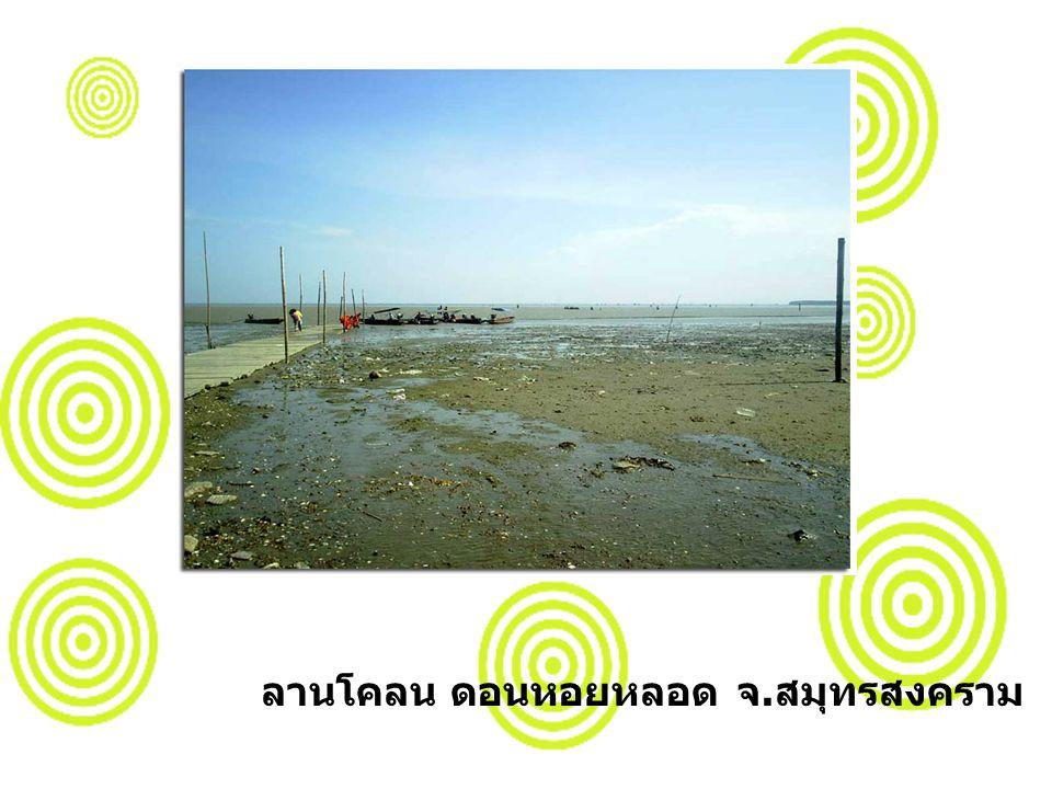 ลานโคลน ดอนหอยหลอด จ.สมุทรสงคราม