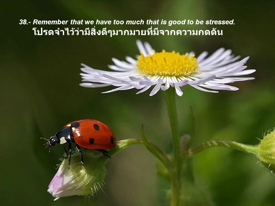 38.- Remember that we have too much that is good to be stressed.
