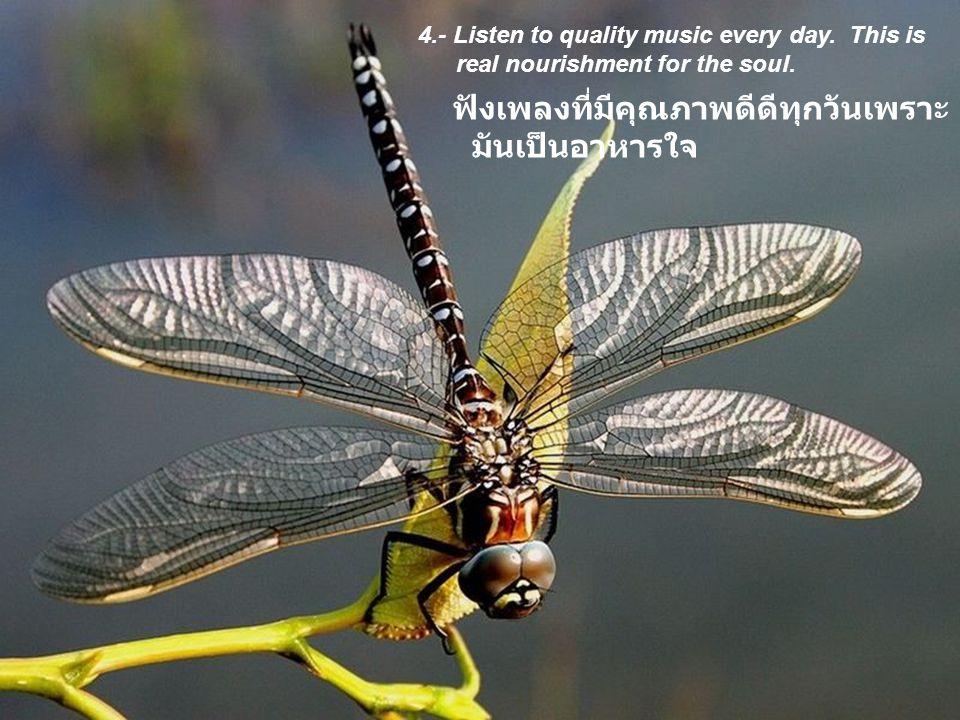 ฟังเพลงที่มีคุณภาพดีดีทุกวันเพราะมันเป็นอาหารใจ