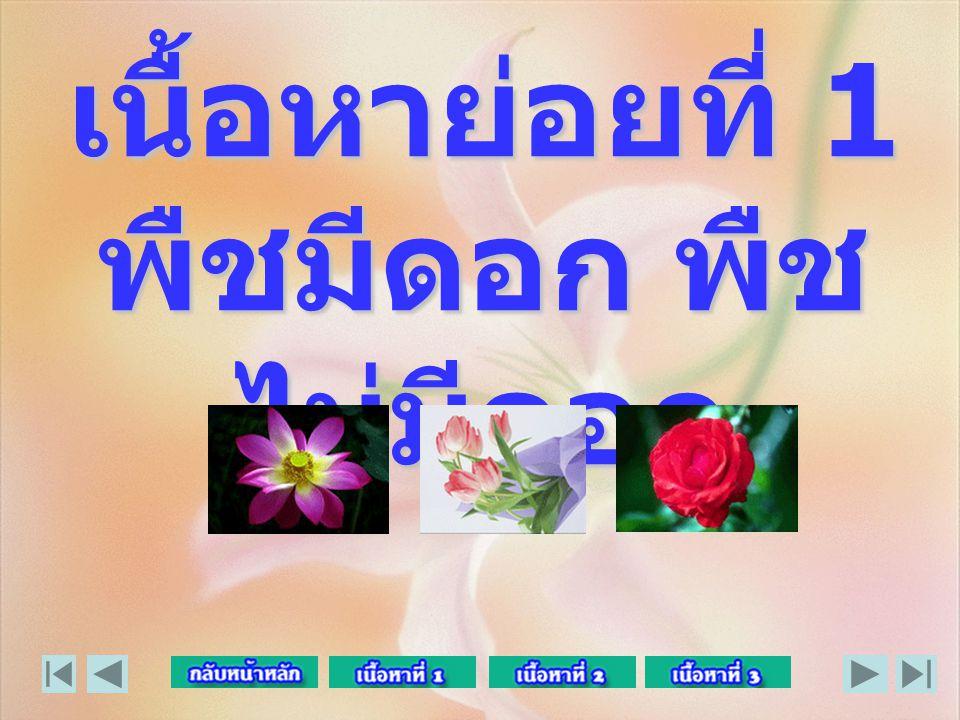 เนื้อหาย่อยที่ 1 พืชมีดอก พืชไม่มีดอก