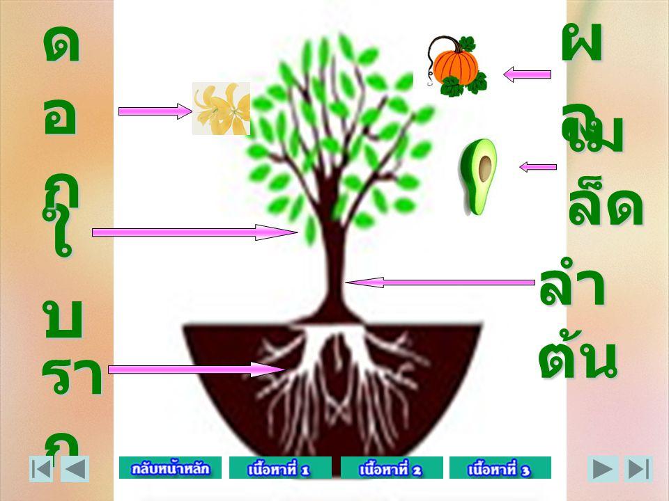 ผล ดอก เมล็ด ใบ ลำต้น ราก
