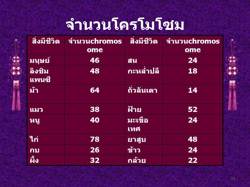 จำนวนโครโมโซม สิ่งมีชีวิต จำนวนchromosome มนุษย์ 46 สน 24 ลิงชิมแพนซี