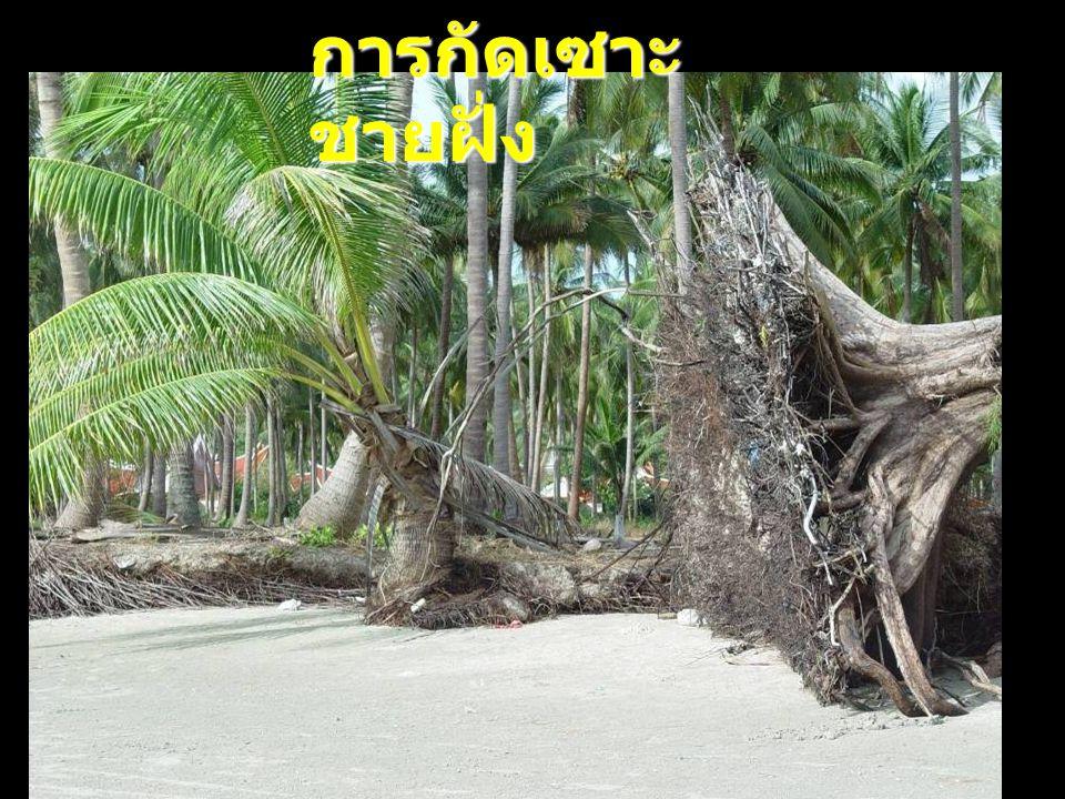 การกัดเซาะชายฝั่ง 30-10-2007 ดร.จิรพล สินธุนาวา 17 17 17
