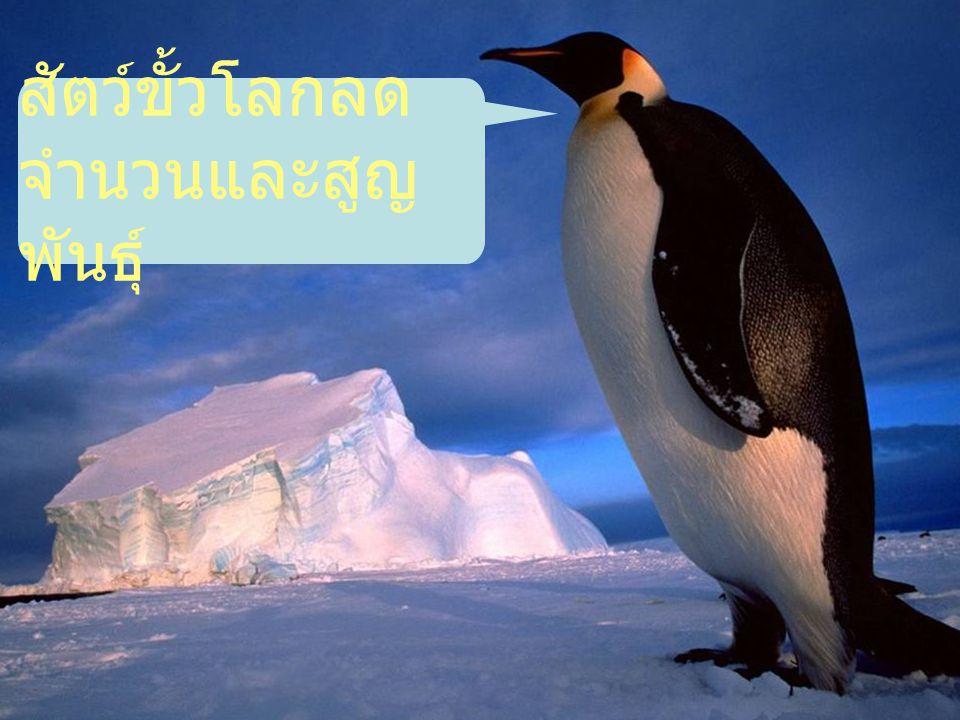 สัตว์ขั้วโลกลดจำนวนและสูญพันธุ์