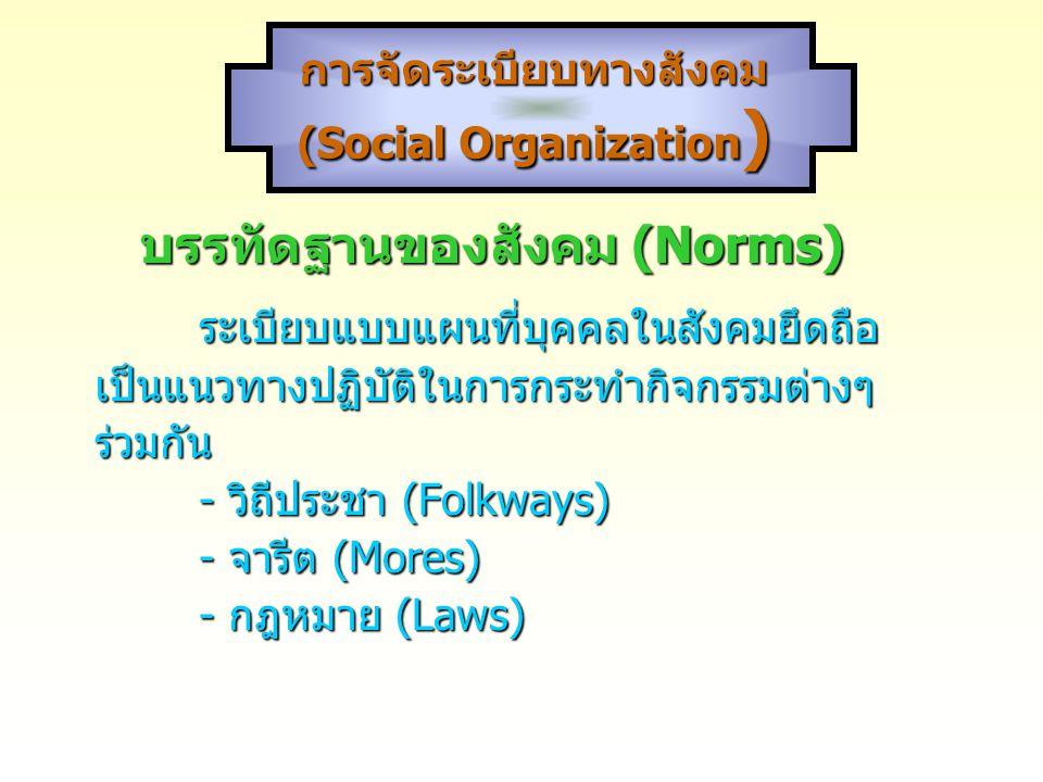 การจัดระเบียบทางสังคม (Social Organization)