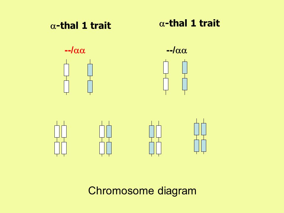 a-thal 1 trait a-thal 1 trait --/aa --/aa Chromosome diagram