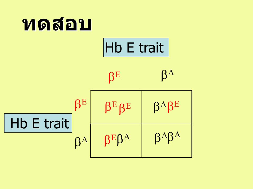 ทดสอบ Hb E trait bA bE bE bE bA bE bE Hb E trait bA bA bE bA bA