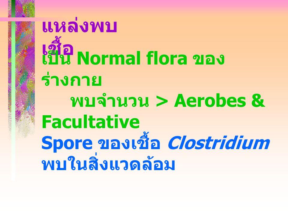 แหล่งพบเชื้อ เป็น Normal flora ของร่างกาย