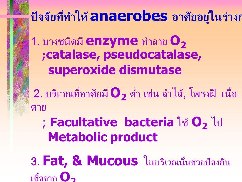 ปัจจัยที่ทำให้ anaerobes อาศัยอยู่ในร่างกายได้