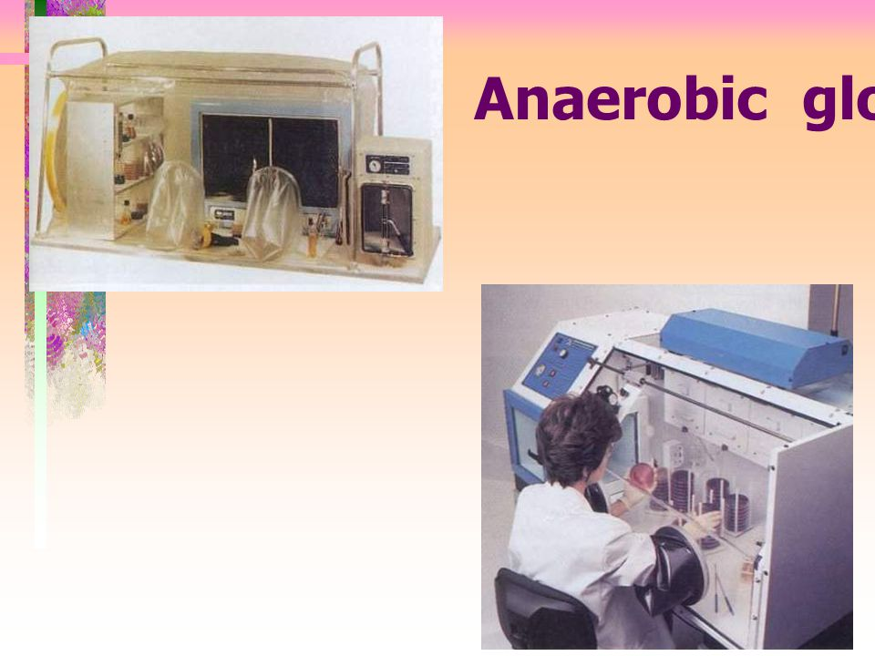 Anaerobic glove box