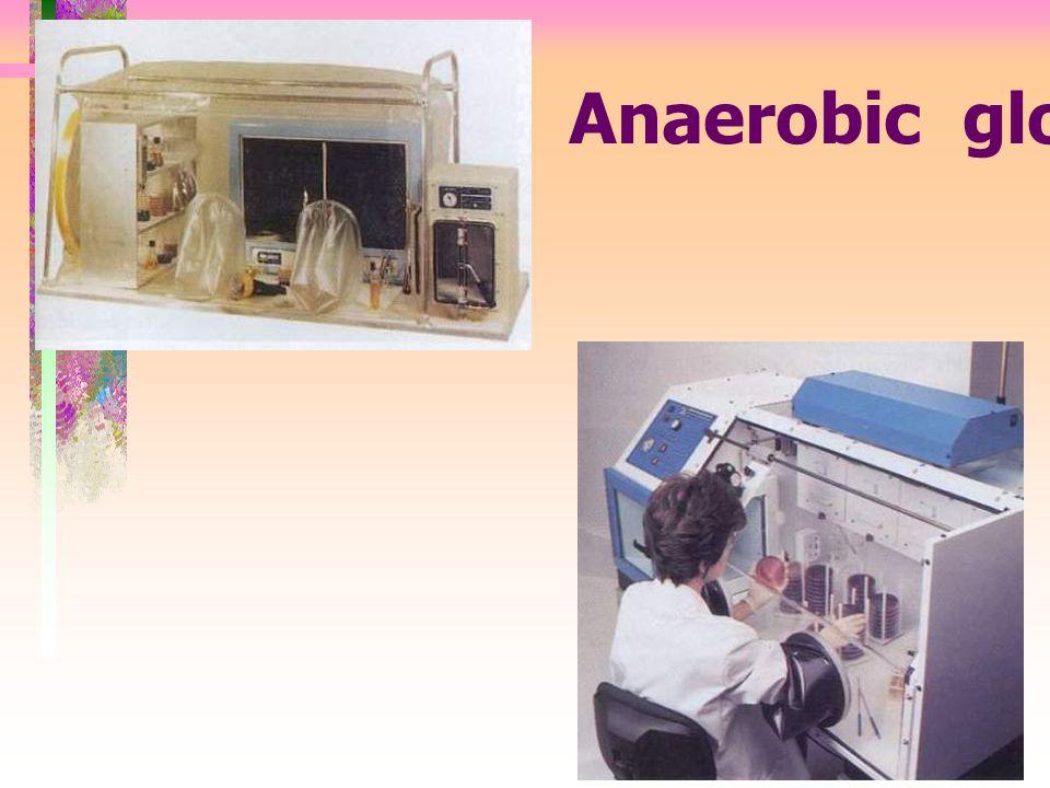 Anaerobic glove box