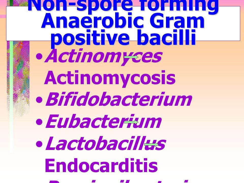 Non-spore forming Anaerobic Gram positive bacilli