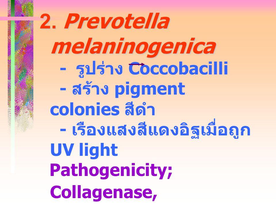 2. Prevotella melaninogenica