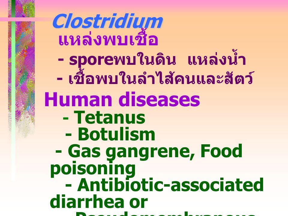 Clostridium - Botulism - Gas gangrene, Food poisoning