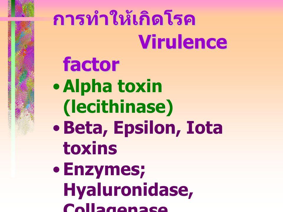 การทำให้เกิดโรค Virulence factor Alpha toxin (lecithinase)