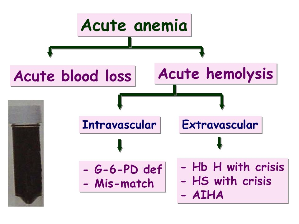 Acute anemia Acute hemolysis Acute blood loss Intravascular