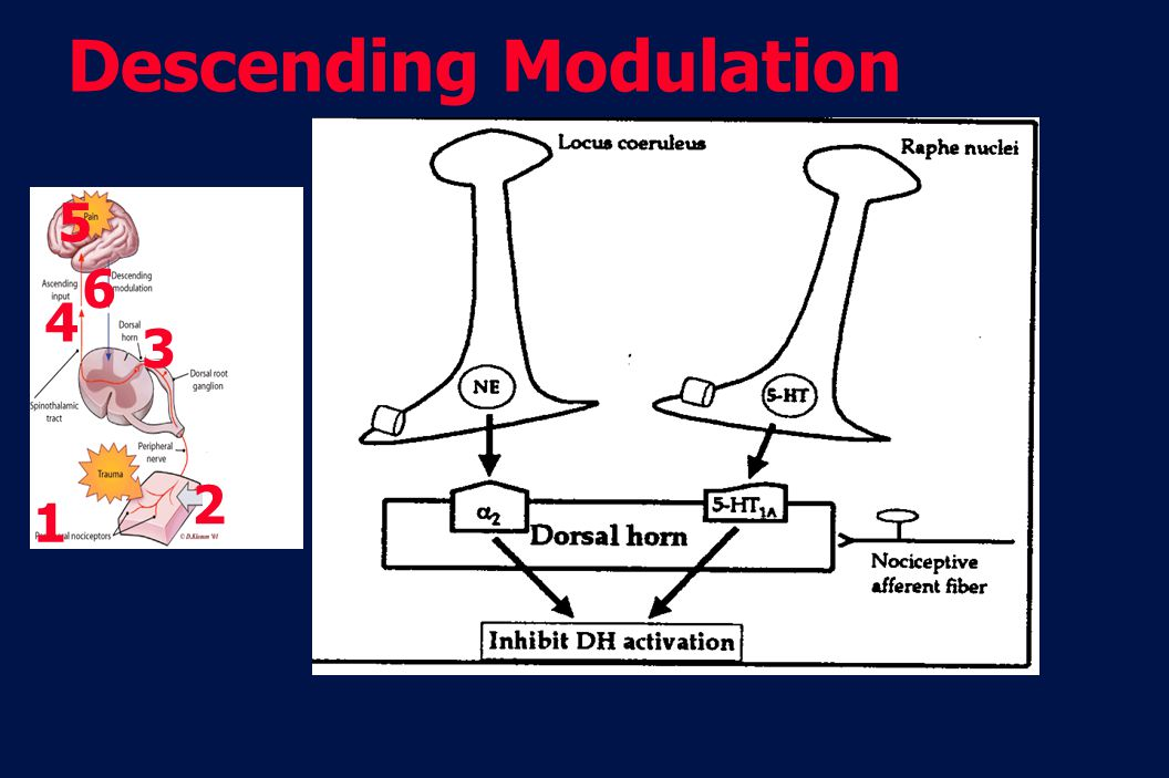 Descending Modulation