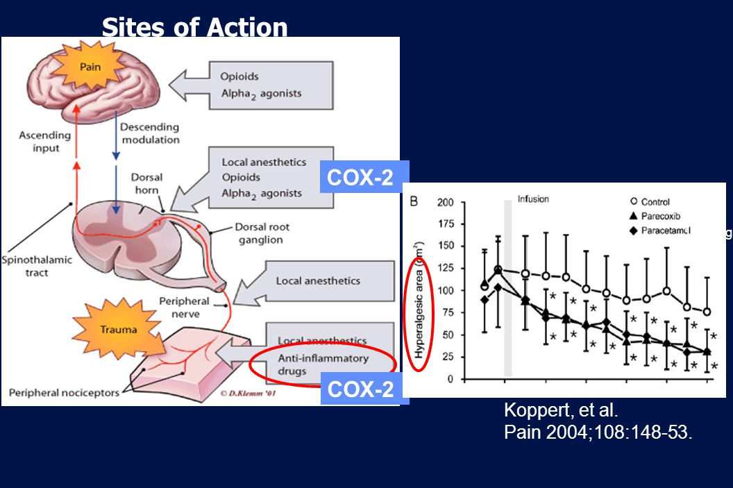 Sites of Action COX-2 COX-2 Koppert, et al. Pain 2004;108: mg