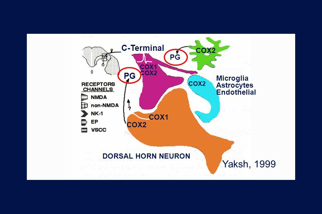 Yaksh, 1999 C-Terminal COX2 PG Microglia Astrocytes Endothelial