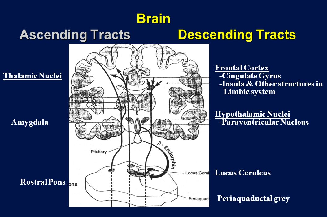 Brain Ascending Tracts Descending Tracts