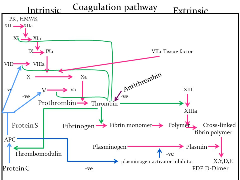 Coagulation pathway Intrinsic Extrinsic PK , HMWK Antithrombin V