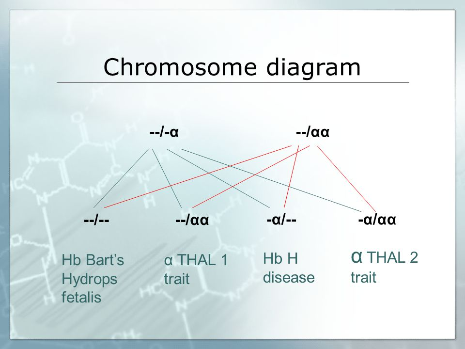 Chromosome diagram α THAL 2 trait --/-α --/αα --/-- --/αα -α/-- -α/αα