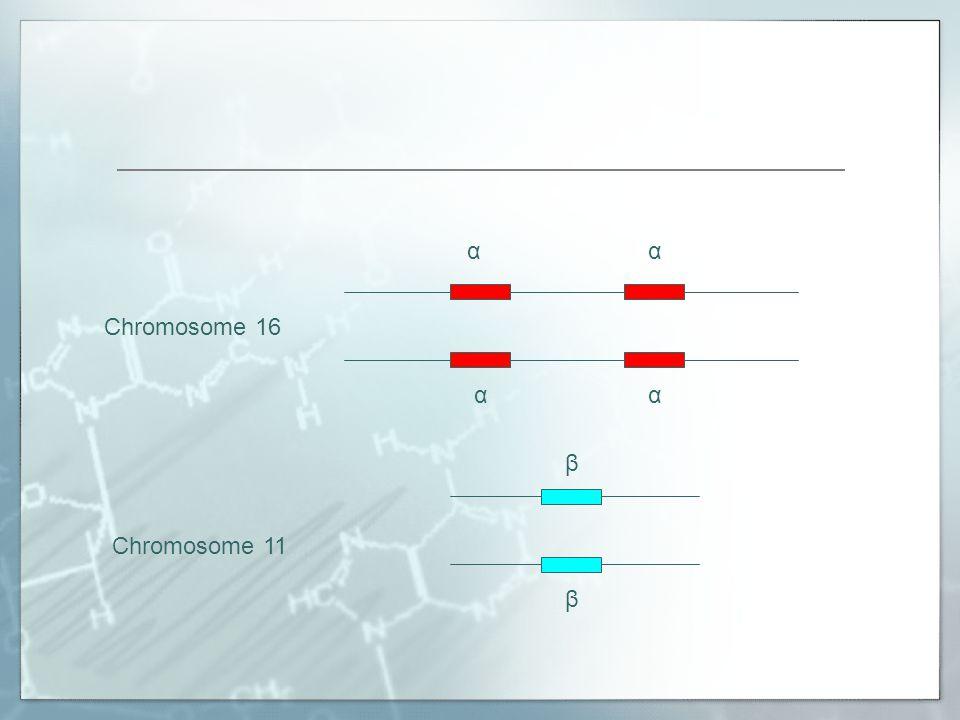 α Chromosome 16 β Chromosome 11
