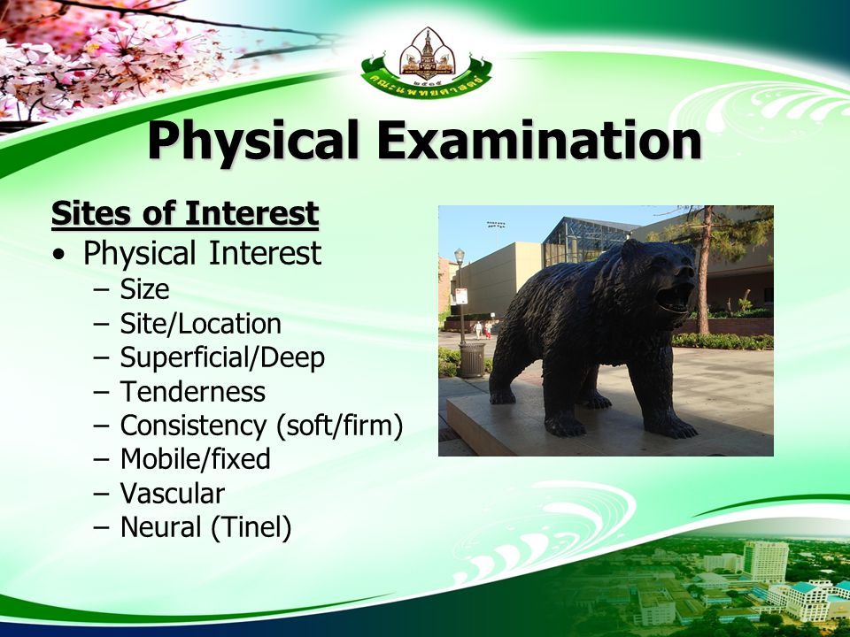 Physical Examination Sites of Interest Physical Interest Size