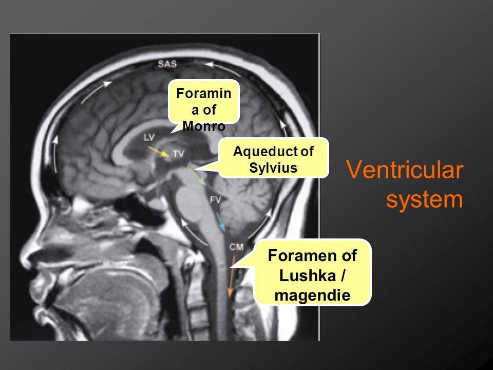 Ventricular system Foramen of Lushka / magendie Foramina of Monro