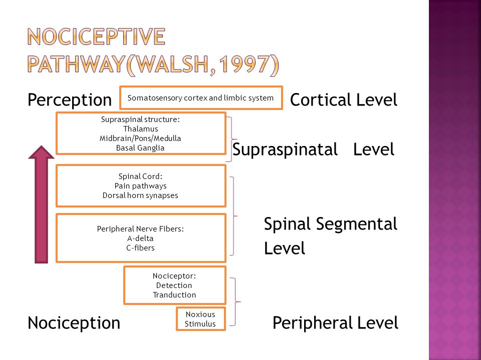 Nociceptive pathway(walsh,1997)