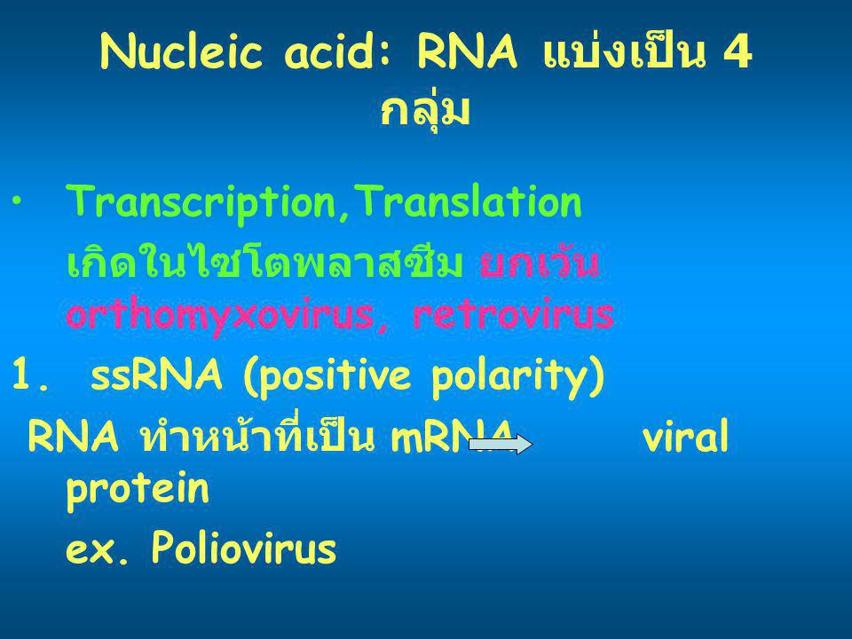 Nucleic acid: RNA แบ่งเป็น 4 กลุ่ม