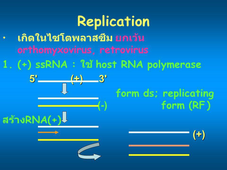 Replication เกิดในไซโตพลาสซึม ยกเว้น orthomyxovirus, retrovirus