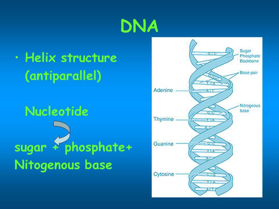 DNA Helix structure (antiparallel) Nucleotide sugar + phosphate+