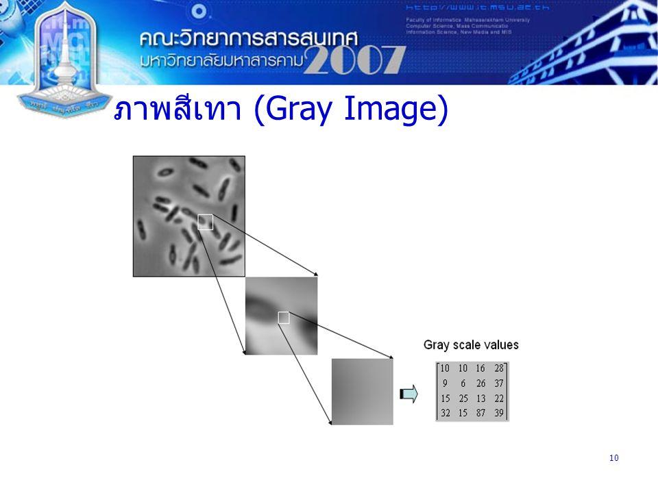 ภาพสีเทา (Gray Image)
