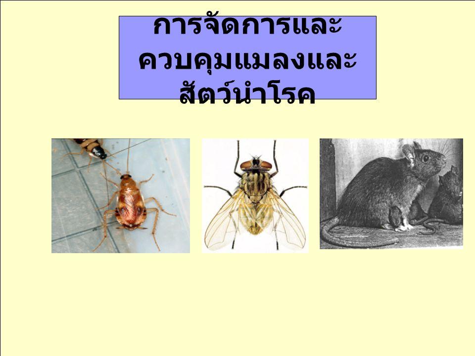 การจัดการและควบคุมแมลงและสัตว์นำโรค