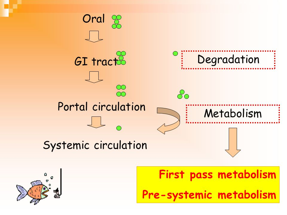 Oral Degradation. GI tract. Portal circulation. Metabolism. Systemic circulation. First pass metabolism.