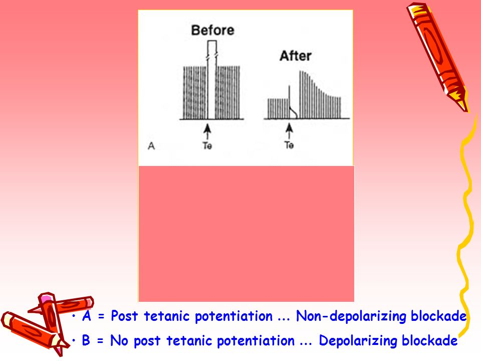 A = Post tetanic potentiation … Non-depolarizing blockade