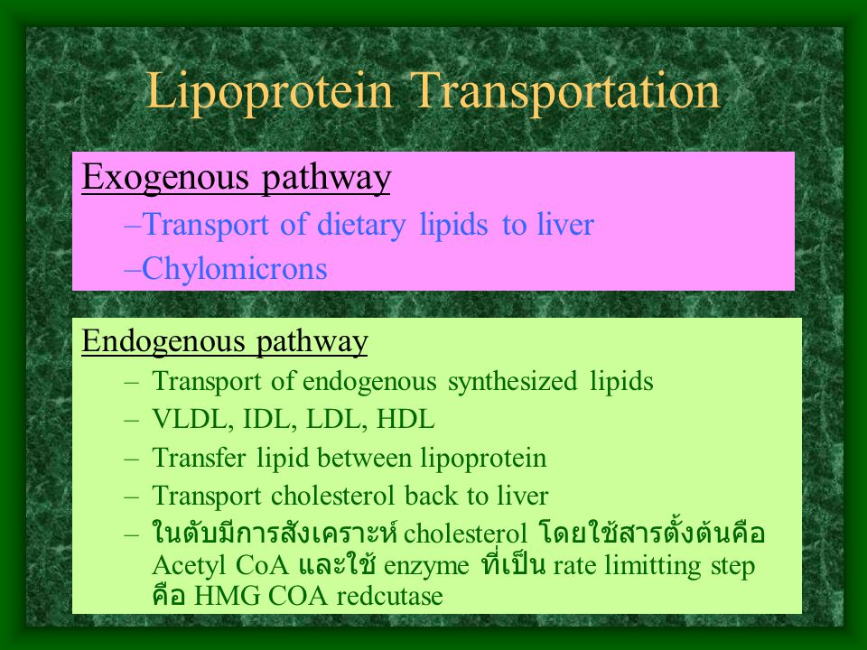 Lipoprotein Transportation