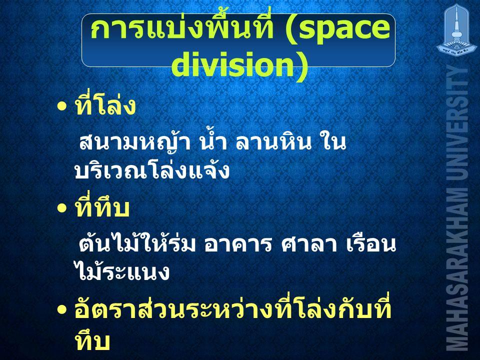 การแบ่งพื้นที่ (space division)