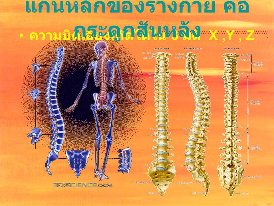 แกนหลักของร่างกาย คือ กระดูกสันหลัง