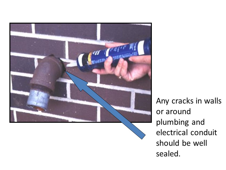 Any cracks in walls or around plumbing and electrical conduit should be well sealed.