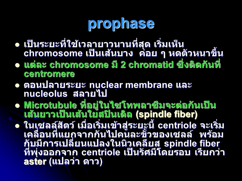 prophase เป็นระยะที่ใช้เวลายาวนานที่สุด เริ่มเห็น chromosome เป็นเส้นบาง ค่อย ๆ หดตัวหนาขึ้น.