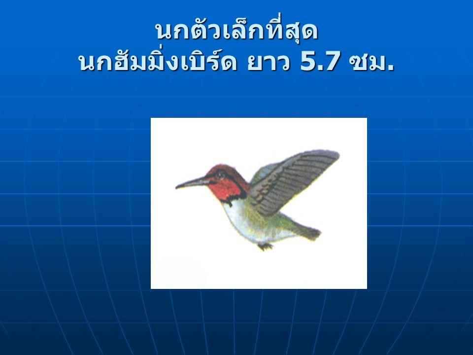 นกตัวเล็กที่สุด นกฮัมมิ่งเบิร์ด ยาว 5.7 ซม.