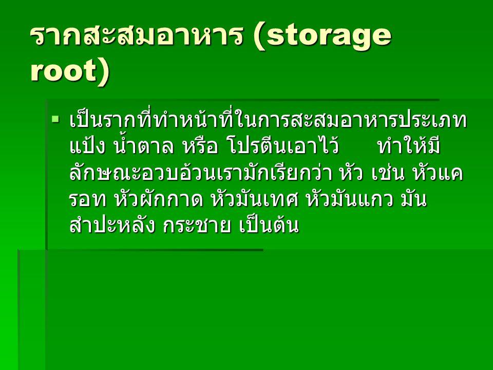 รากสะสมอาหาร (storage root)