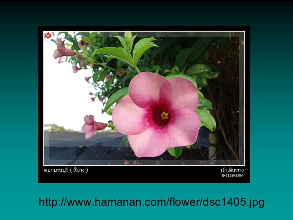 http://www.hamanan.com/flower/dsc1405.jpg