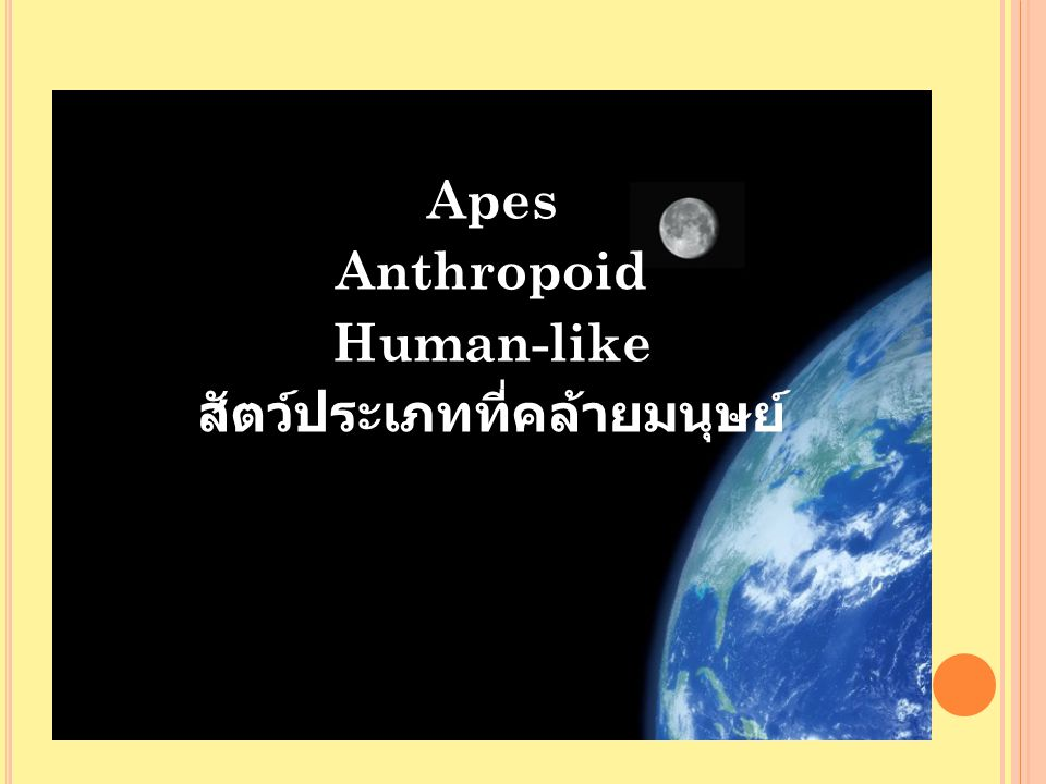 Apes Anthropoid Human-like สัตว์ประเภทที่คล้ายมนุษย์