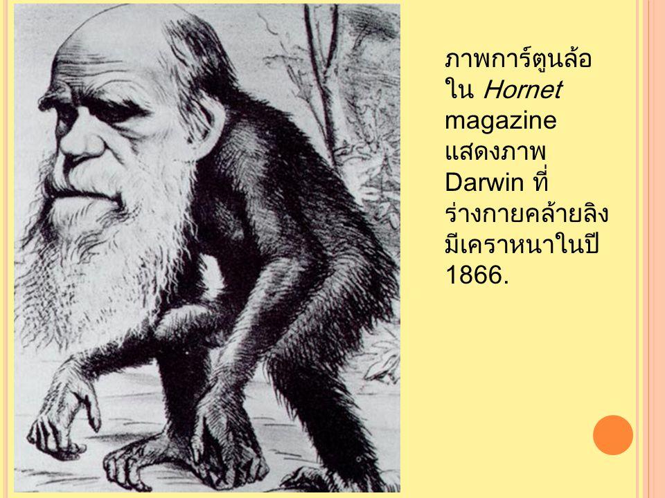 ภาพการ์ตูนล้อใน Hornet magazine แสดงภาพ Darwin ที่ร่างกายคล้ายลิงมีเคราหนาในปี 1866.