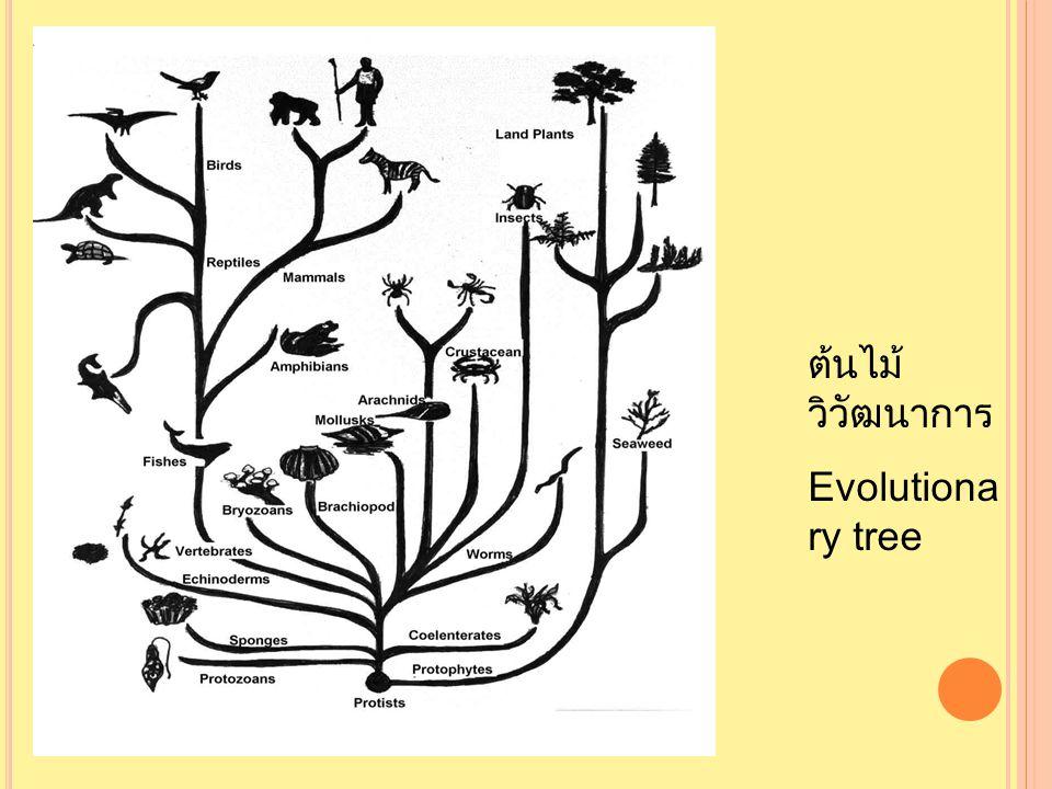 ต้นไม้วิวัฒนาการ Evolutionary tree