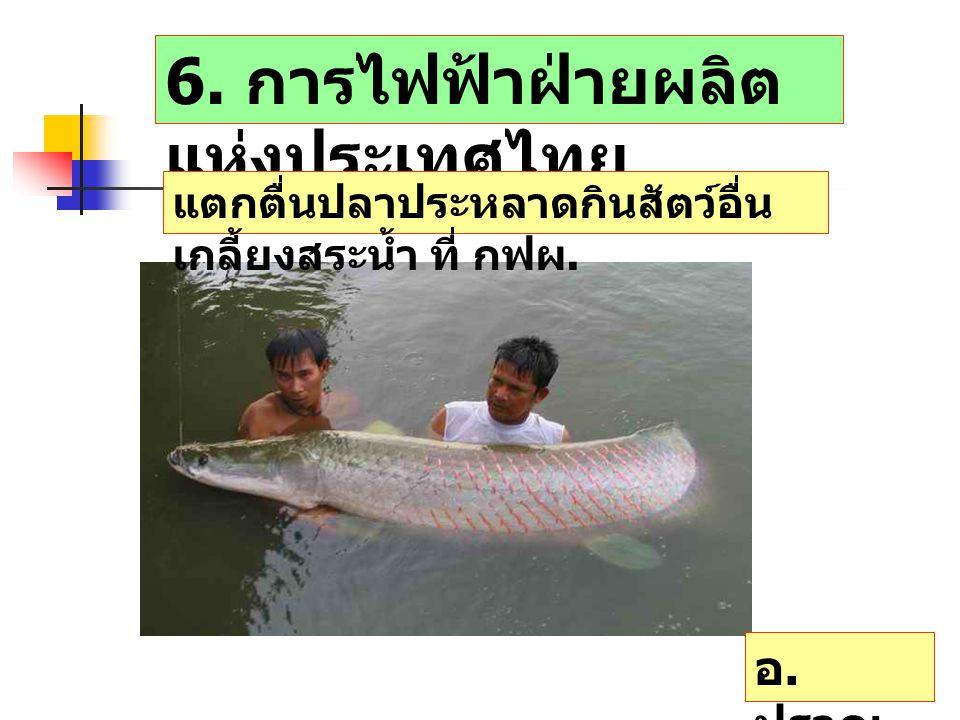 6. การไฟฟ้าฝ่ายผลิตแห่งประเทศไทย
